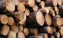 Задържаха бивш зам.-кмет на Белово за незаконна дървесина