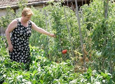 Най-малките стопани ще спечелят от новата схема. Ако обаче произвеждат плодове или зеленчуци, трябва да си направят внимателно сметката, защото за тях има допълнително подпомагане.