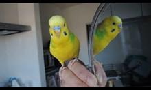 Компилация с папагали