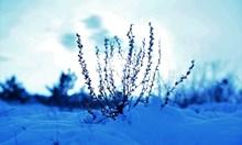 Днес отново ще вали сняг, температурите няма да превишават 5 градуса