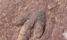 Следи от огромни хищни динозаври са открити в Австралия