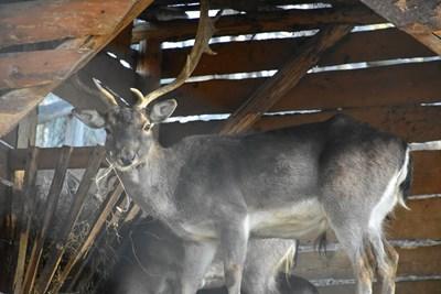 Община Благоевград е заделила средства за разширяване на клетките на животните в зоопарка.