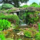 Камъни и растения