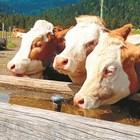 Има ли норматив за поене на животните?