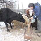 Синтезирано за животновъдите