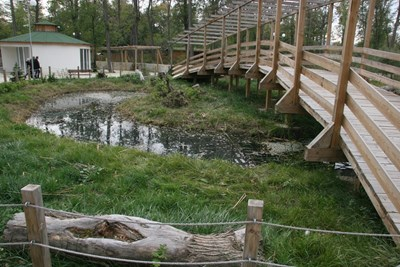Тотев ще поиска от Шънджън червени панди за пловдивския зоопарк