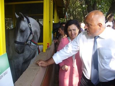Премиерът Бойко Борисов и земеделският министър Десислава Танева се задържаха дълго около българските породи коне, показани на изложението в Сливен. СНИМКА: Ваньо Стоилов