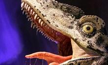 """Джурасикпарк """"България"""": За първи път край Трън откриха динозавър канибал"""