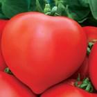 Сияна - най-новиятхибриден сорт домати