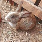 Зайчарникът трябва да е сух!