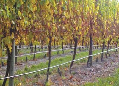 Забраняват гроздобера в Дупнишко преди 6 часа и след 19 часа