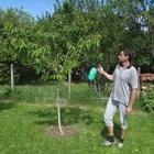 Комбинирани мерки за ефективна борба с червения овощен акар