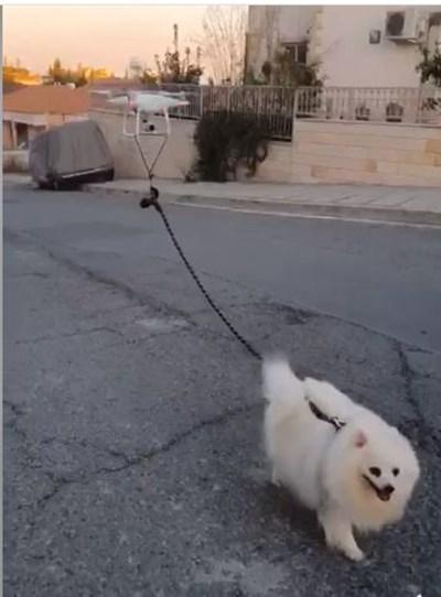 Ето как да разходите кучето, докато сте под карантина