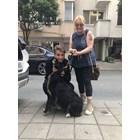 """Откриха откраднатото куче на дует """"Ритон"""" на 400 км. от дома им"""