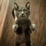 Научнодоказани причини да си вземем котка