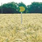 Колорит Снимка: Добруджански земеделски институт