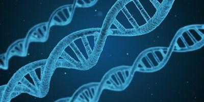 Напредък в редактирането на гени ще позволи да се лекуват нелечими заболявания, като диабет и мускулна дистрофия, сочат резултатите от изследване. СНИМКА: Pixabay