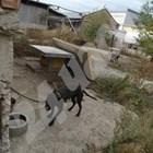 """Пловдив търси 259 хил. лв за спасените питбули от """"арената на  смъртта"""""""