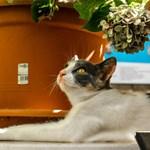 Най-популярните стайни растения са отрова за котките