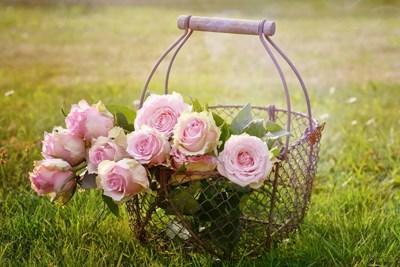 Розовата вода - източник на здраве и красота