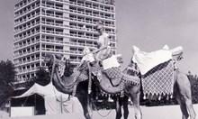 В 15,50 ч. на 8.06.1959 г. пристигат първите чешки туристи на Слънчев бряг. Курортът израства като Лас Вегас от нищото - от пясъчна пустиня