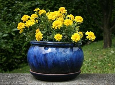 Градина: Народна медицина за цветята