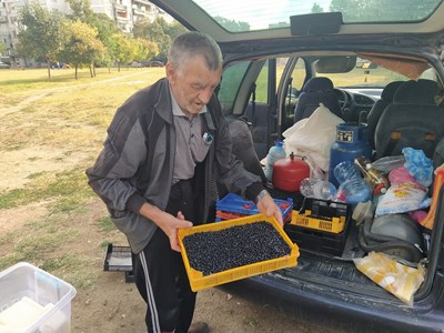 Муса от Юндола вади касетките с диви боровинки, а пловдивчани буквално ги разграбват. Снимки: Авторът