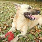 Подгответе кучето за есента