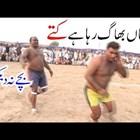 Пакистански бой с шамари