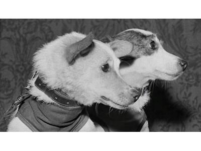 Белка и Стрелка – съветските помиярчета, които ни проправиха път сред звездите