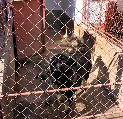 Кучетата в пловдивския приют са прибрани на топло и ги греят с инфрачервени лампи.