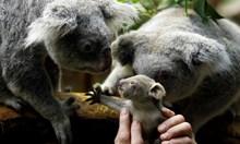 Краят на видовете: Милиарди животни са застрашени от изчезване