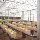 Съоръжението за аквапоника на университета Обърн съчетава технологии за хидропоника и аквакултури, за да създаде минимална отпадъчна полузатворена система с ограничено въздействие върху околната среда