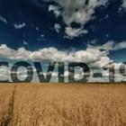 Рязък спад в цените на зърното