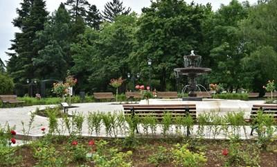 Над 2000 рози красят обновения розариум в Борисовата градина. Снимки: Гео Калев