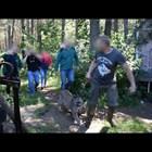 Бивш полски войник 3 дни се укрива с пумата си в гората (Видео)