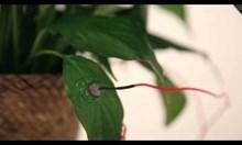 Гласът на растенията