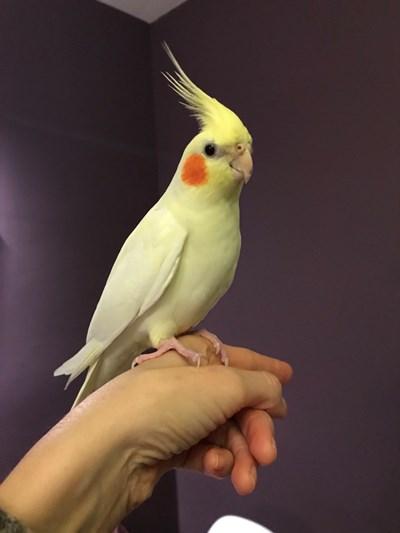 Папагалът Кара отново е у дома.