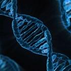 Гените, които някои хора са наследили от неандерталските си предшественици, повишават вероятността от развитие на по-тежки форми на COVID-19 СНИМКА: Pixabay