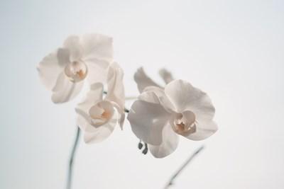 Градина: Как канелата предпазва орхидеите