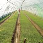 Започва подготовката на зеленчуковите разсади