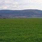 Новите предизвикателства на времето изискат нов подход към зърнено-житните култури