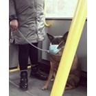 Домашен любимец  с маска в градския транспорт