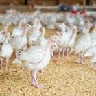 Колкото по-дребни са праховите частици, толкова по-дълбоко проникват в белите дробове на птиците и затова са по-опасни.