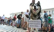 Любимецът на протеста Хъскито Арагон си търси гадже