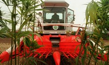 """Сърби заработват по $ 6000 на месец в BG плантации в """"рая на канабиса"""""""
