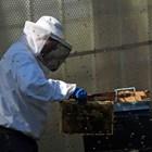 Целта на изграждането е да получите голяма рамка с три отделения - горно в магазина, средно и долно в плодника. В най-горното (в магазина) пчелите изграждат и запълват с мед. А средното и долното се използват като строителни (за търтеи) отделения - изрязват се последователно, както на обикновената строителна рамка.