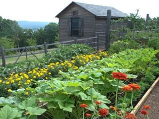 За красива градина през лятото - какво не трябва да забравяте