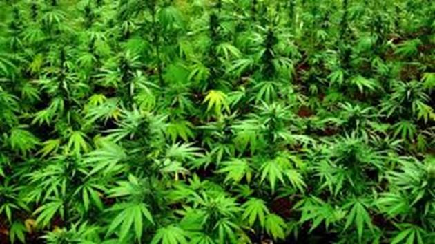 Плантация с дрога до Скравена