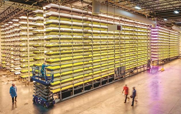 Първоначалната изследователска работа вече е започнала в глобалната централа на AeroFarms в Нюарк, Ню Джърси
